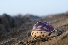 Free Shell In The Beach Stock Photos - 2635223