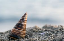 Free Shell In The Beach Royalty Free Stock Image - 2635266