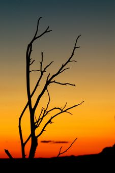 Free Desert Tree Stock Images - 2635684