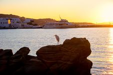 Free Harbor Egret Royalty Free Stock Photos - 2636648