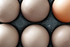 Free Six Chicken Eggs Stock Images - 2638604