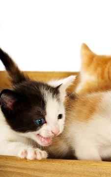 Free Crazed Kitten Stock Photos - 2639823