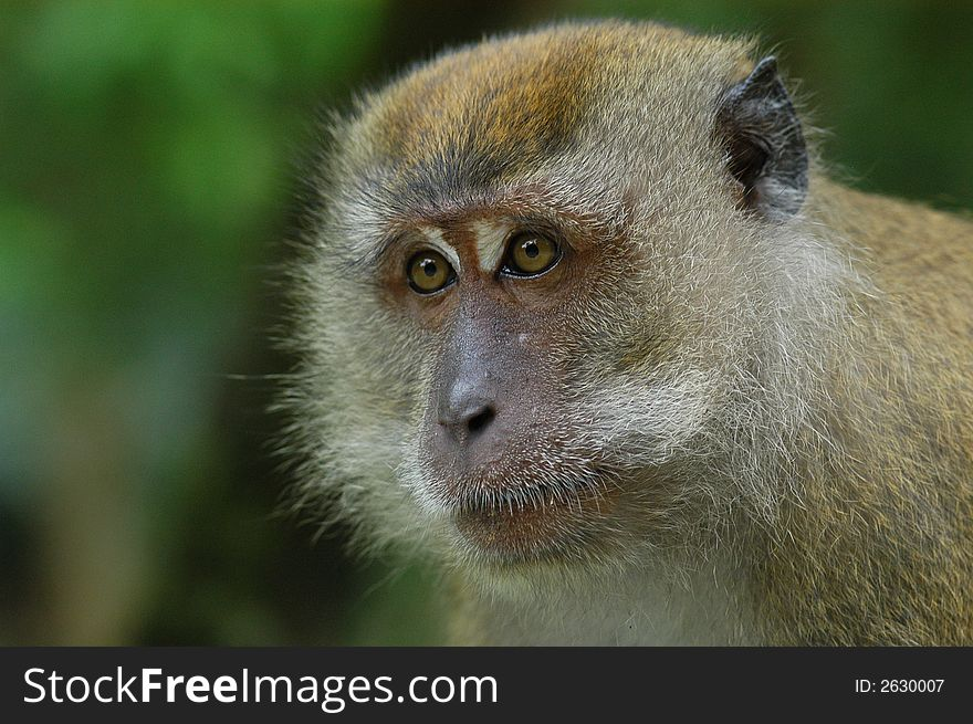 Brown Color Monkey - Free Stock Images & Photos - 2630007 ... Brown Color Monkey - Free Stock Images & Photos - 2630007 ... Brown Things brown color id