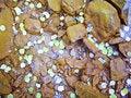 Free Sprinkle Of Aspen Leaves Stock Image - 26304731