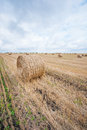 Free Hay Bale In The Field Stock Photography - 26306362