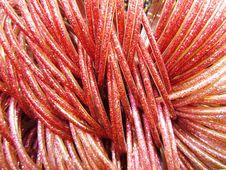 Free Magenta Red Bangle Pattern Stock Photos - 26304203