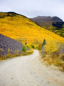 Colorado Hillside Ablaze With Yellow Aspen Stock Image
