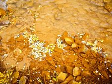 Muddy Stream With Yellow Aspen Leaves Stock Image