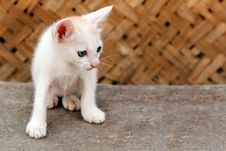 Free Beautiful White Colored Young Kitten Staring Stock Images - 26309634