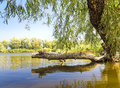 Free Broken Tree By The Lake Stock Photos - 26311963