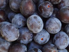 Free Plums Stock Images - 26310994
