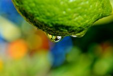 Free Raindrop On Lemon Stock Photo - 26311100