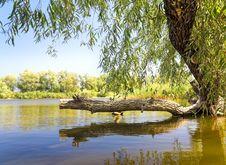 Free Broken Tree By The Lake Stock Photos - 26311963