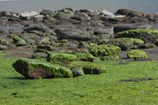 English Coast At Low Tide Royalty Free Stock Photography