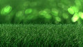 Free Close Up Backdrop Of Fresh Thick Grass Stock Images - 26333474