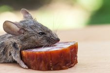 Mouse Close Up Stock Images