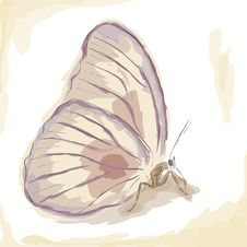 Free Butterfly Stock Image - 26340701