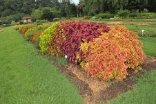 Free Garden Royalty Free Stock Image - 26348176