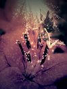 Free Fairy And Flower Royalty Free Stock Photos - 26361458