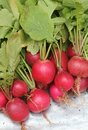 Free Fresh Red Colored Radish From A Organic Garden Stock Photos - 26367653