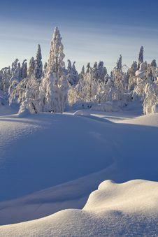 Free Sunny Winter Day Royalty Free Stock Photo - 26361135