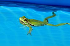 Free Tree-frog Stock Images - 26364144