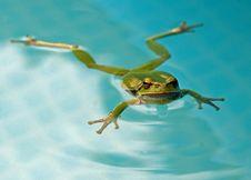 Free Tree-frog Royalty Free Stock Image - 26364326