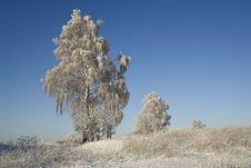 Free Winter Morning Royalty Free Stock Photos - 26366688