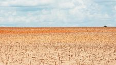 Free Newly Planted Tapioca Field Stock Photography - 26372152