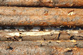 Free Stacked Logs Stock Photography - 26384362