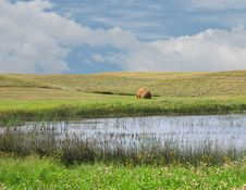 Marsh In The Mid-west Prairies Stock Photo