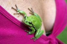 Free Tree-frog Stock Images - 26381064