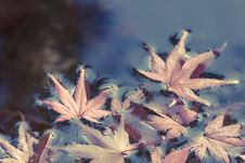 Autumnal Leafs Royalty Free Stock Photos