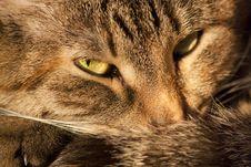 Free Lying Cat Background Stock Photography - 26385022