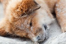 Free Elo Puppy Sleeps At The Beach Royalty Free Stock Photos - 26399978