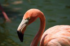 Free Flamingo Detail Stock Photos - 2642113