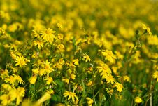 Free Flowers Field Royalty Free Stock Image - 2642176