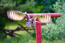 Great Horned Owl Flying 4 Stock Photo