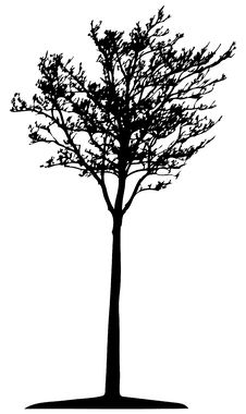 Free Tree (vector) Stock Photo - 2644020