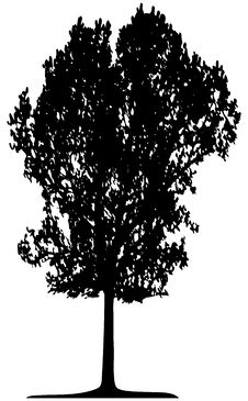 Free Tree (vector) Royalty Free Stock Photography - 2644027