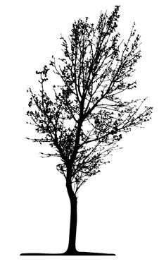 Free Tree (vector) Royalty Free Stock Image - 2644166