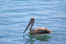 Free Pelican Afloat Stock Photography - 2645052
