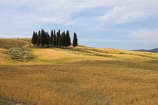 Free Landscape,Tuscany Val D Orcia Stock Photography - 2645082