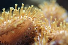 Free Sea Anemones In Macro Stock Image - 2647361