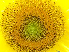 Free Sunflower Pattern Royalty Free Stock Image - 2647746