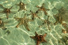Free Starfish Stock Photography - 2649342