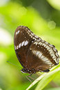 Free Closeup Butterfly On Green Leaf Royalty Free Stock Image - 26401566