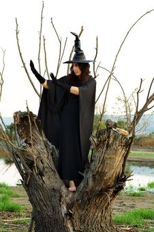 Free Halloween Witch Royalty Free Stock Image - 26401816