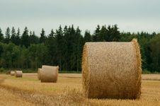 Free Hay Bale Royalty Free Stock Image - 26402606
