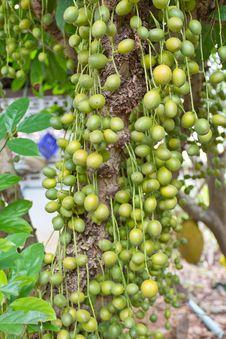 Free Green Burmese Grape Royalty Free Stock Photography - 26406907